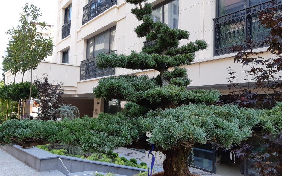Озеленяване и поддръжка Sofia luxory Residence