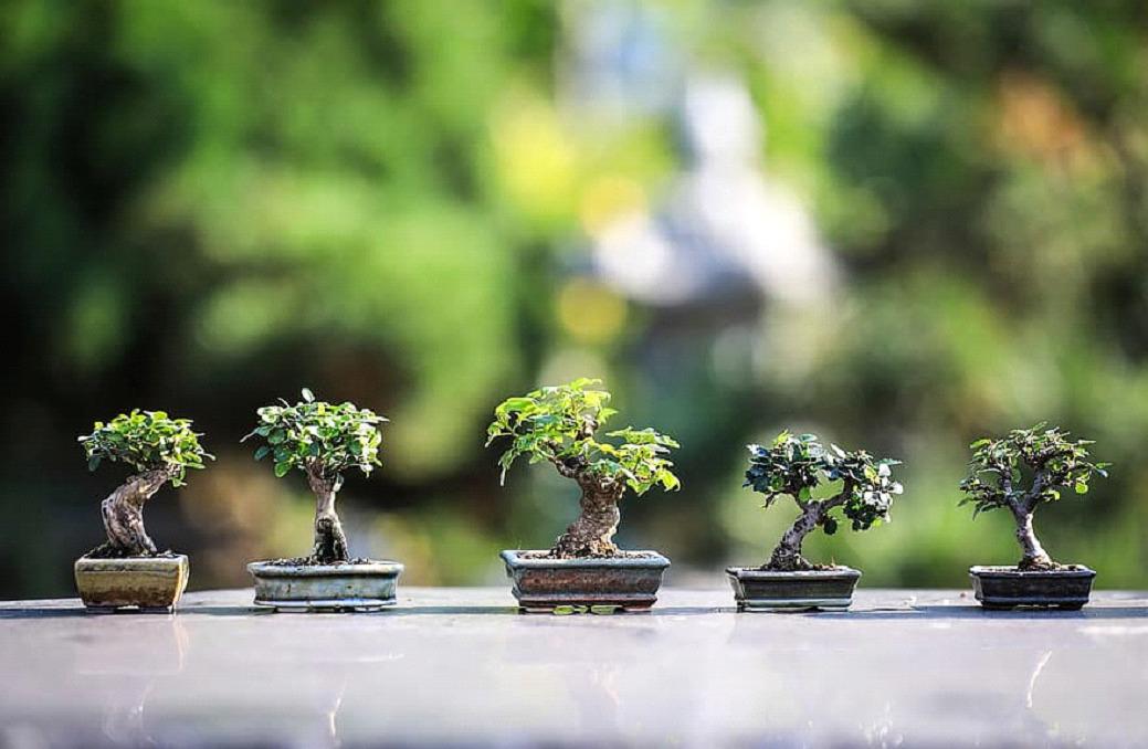 Интериорно озеленяване Green Dream